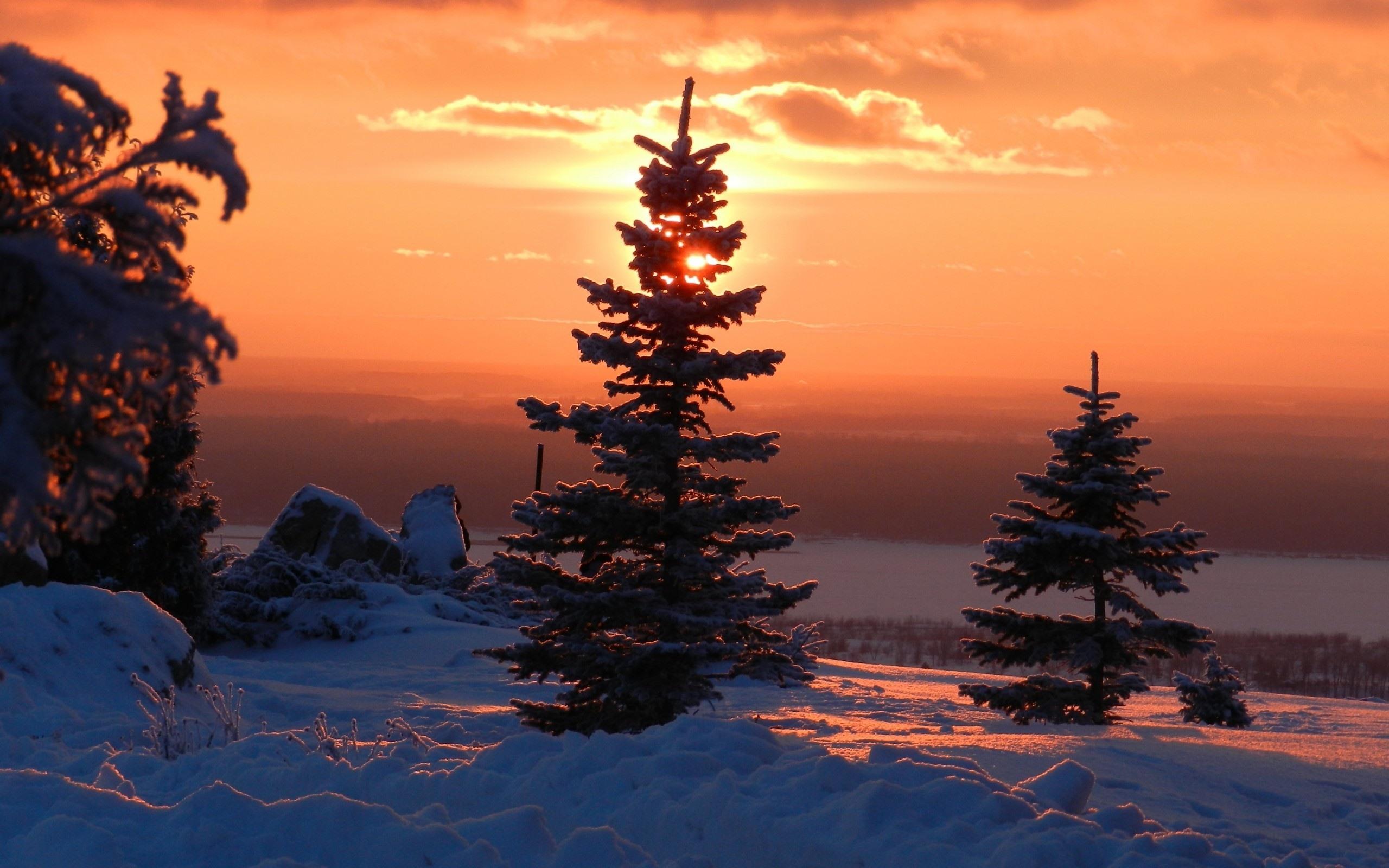 Обои восход, ёлки, утро. Природа foto 10