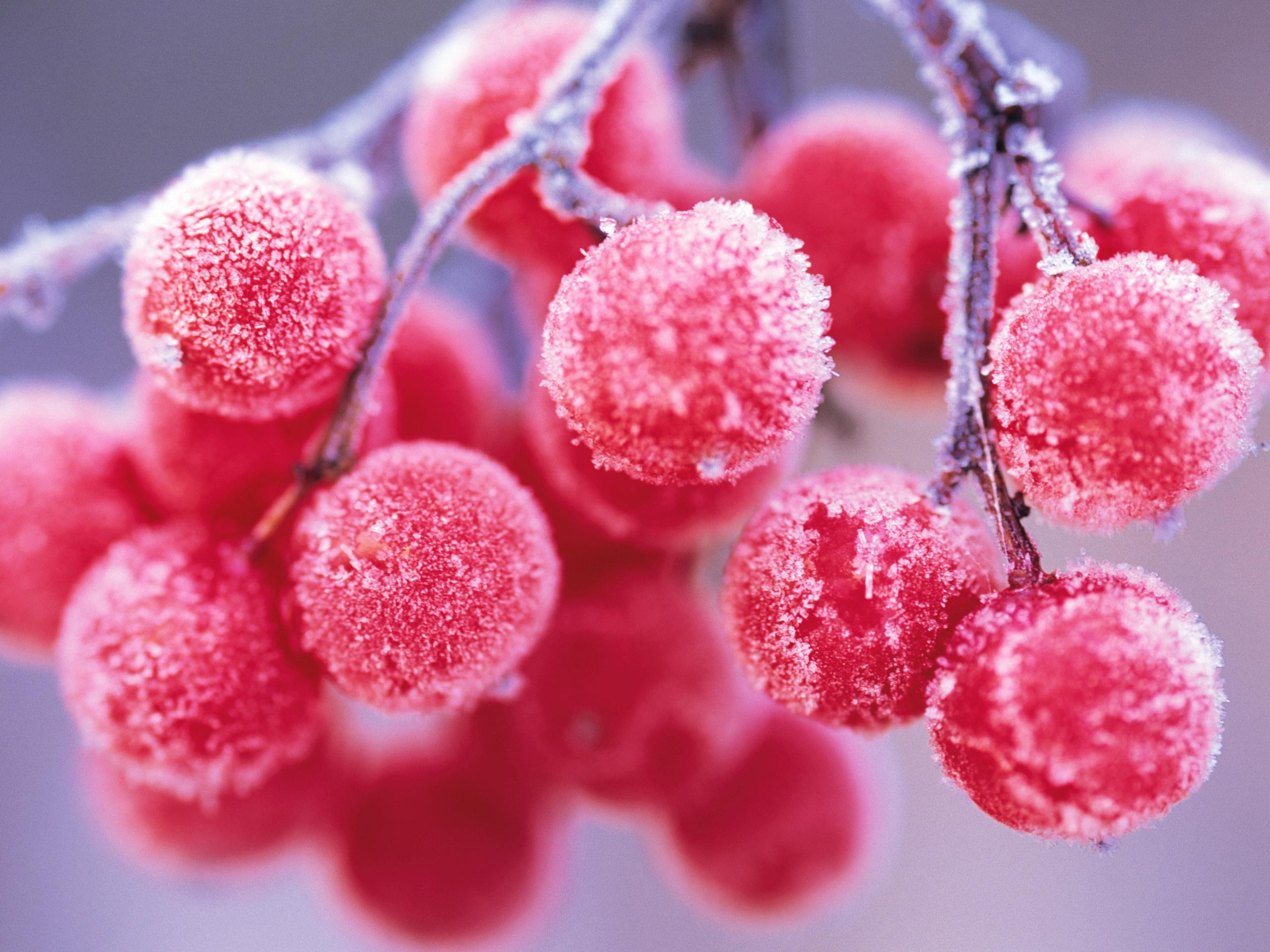 kleine rote beeren frost zweig 2560x1920 hd hintergrundbilder hd bild. Black Bedroom Furniture Sets. Home Design Ideas