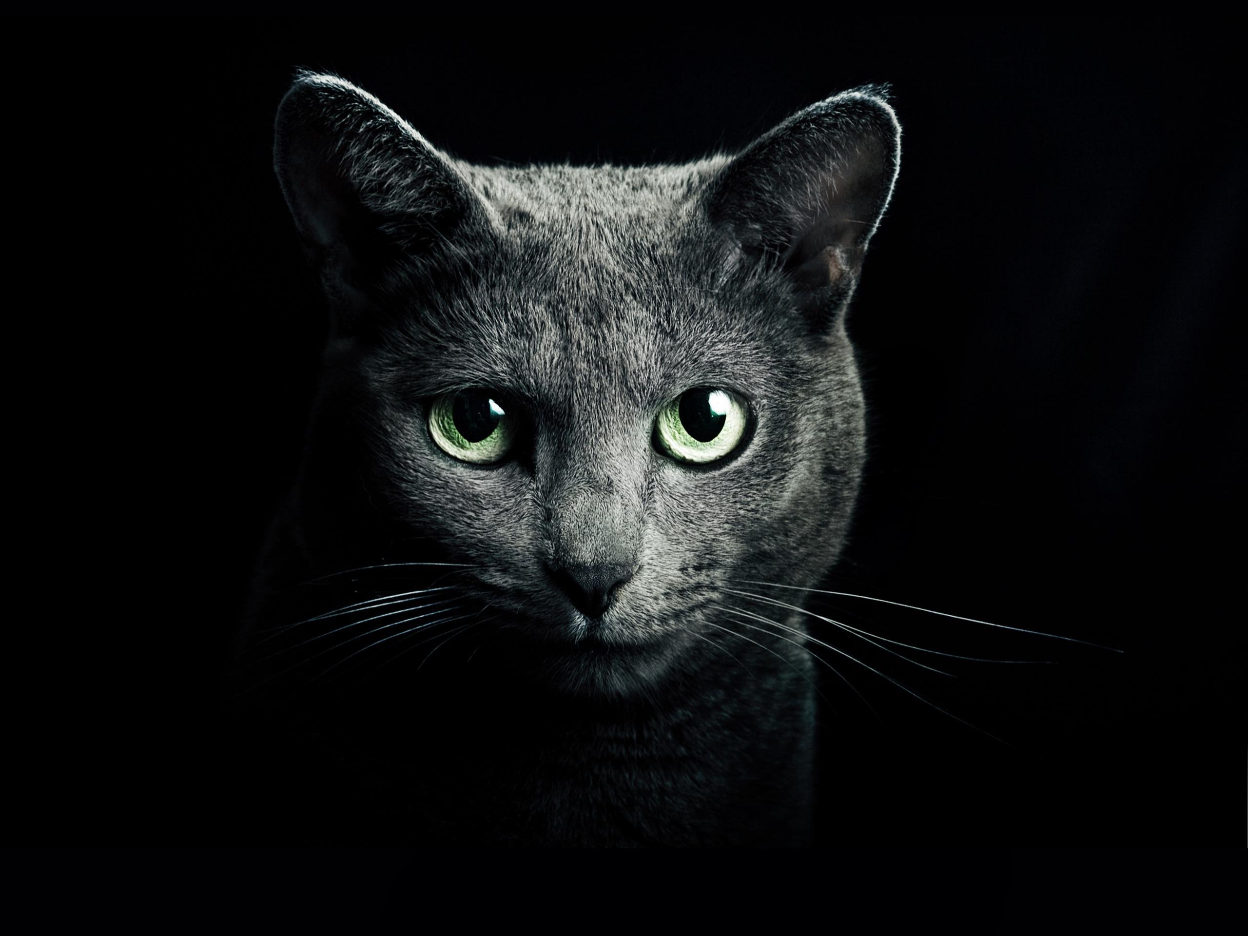Белый котенок в темноте скачать