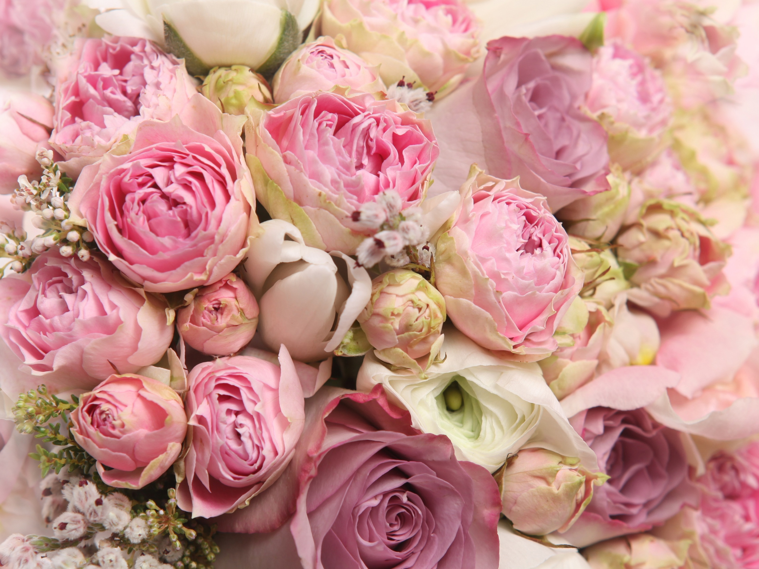 красивое фото с цветами важно подобрать