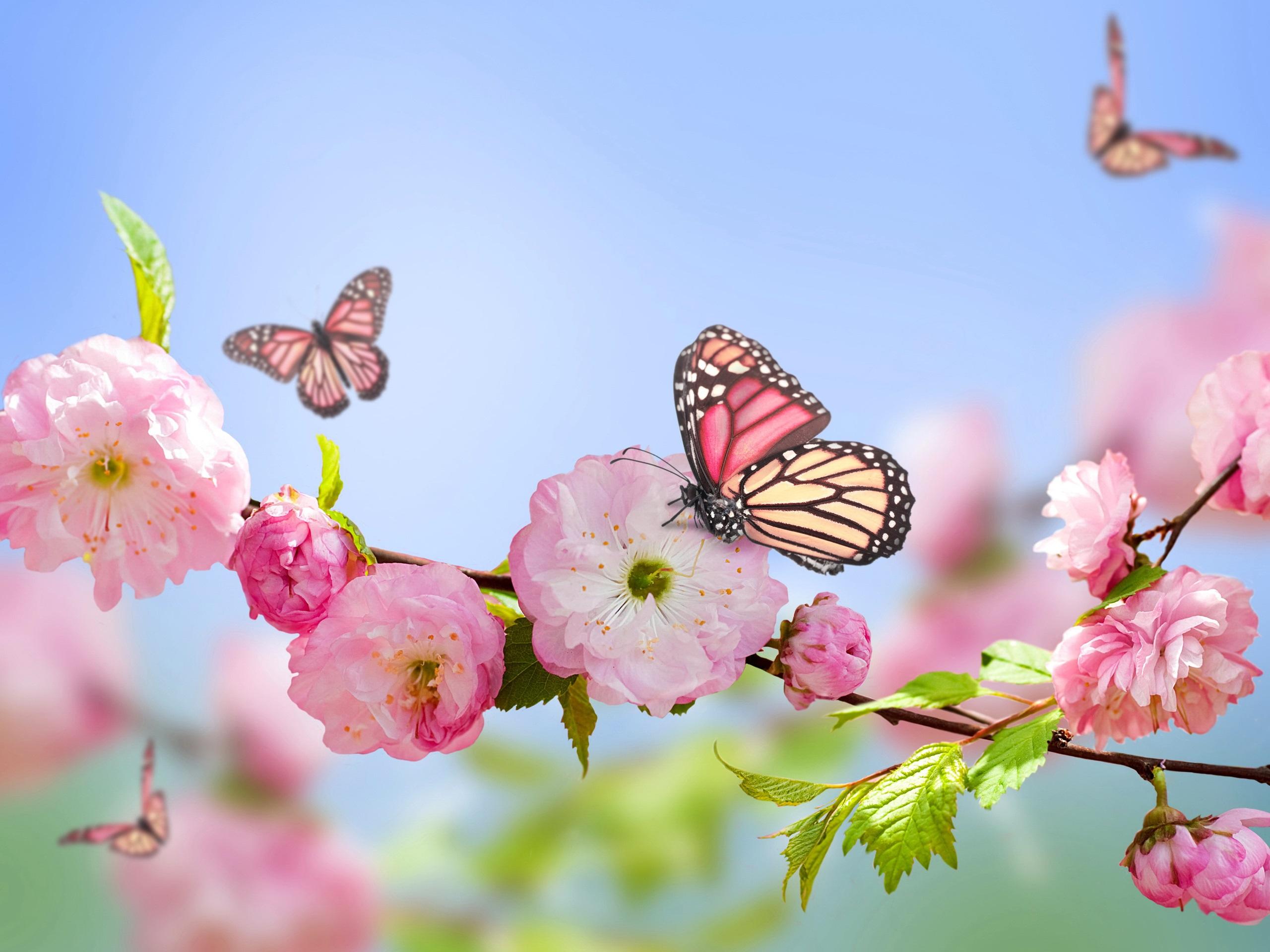 Primavera Flores De Color Rosa Mariposas Cielo Azul Fondos De