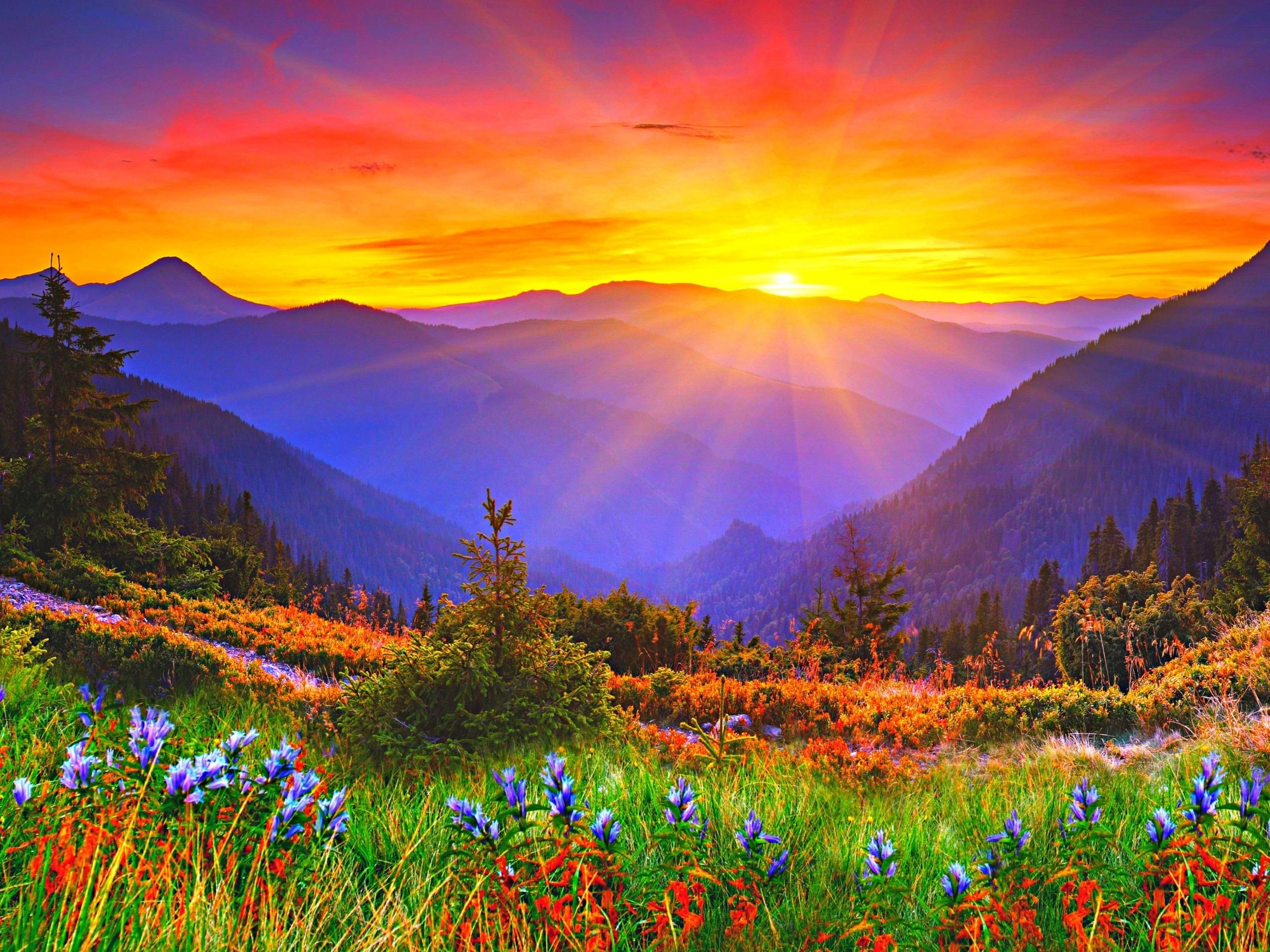 sunrise mountains flowers - photo #1