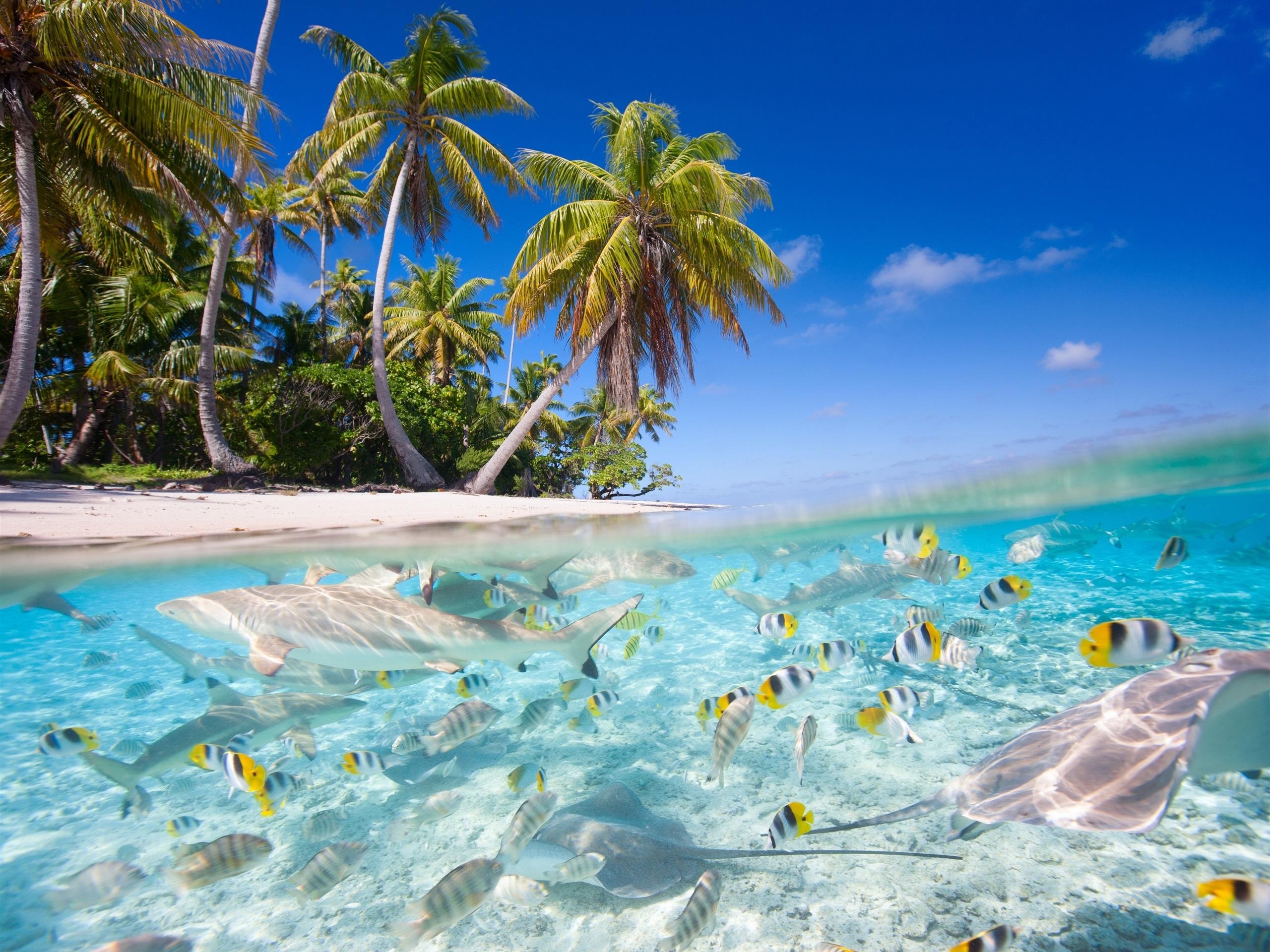 paisaje tropical mar playa palmeras peces tiburones