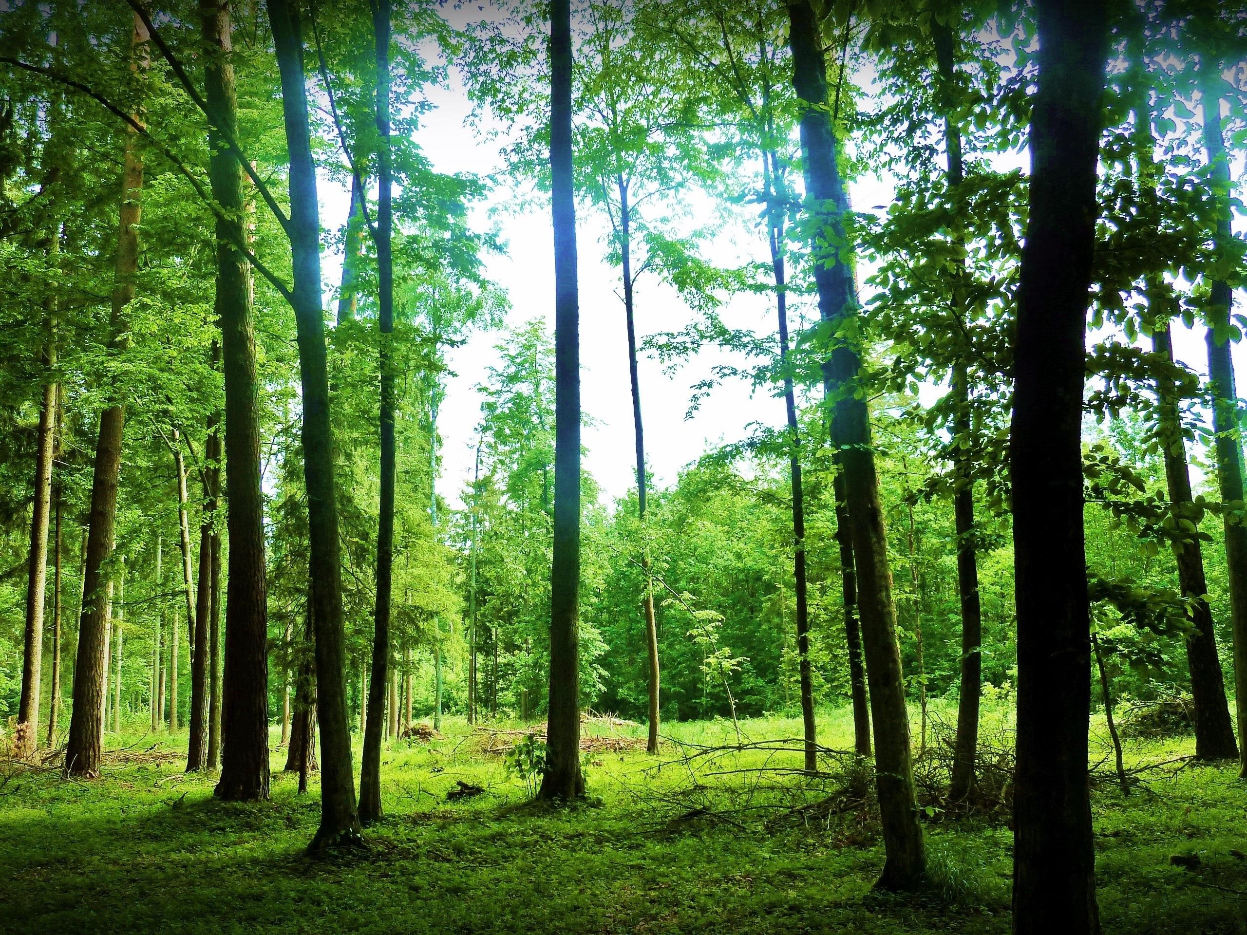 озеро деревья зелень лес лето  № 3246421 загрузить