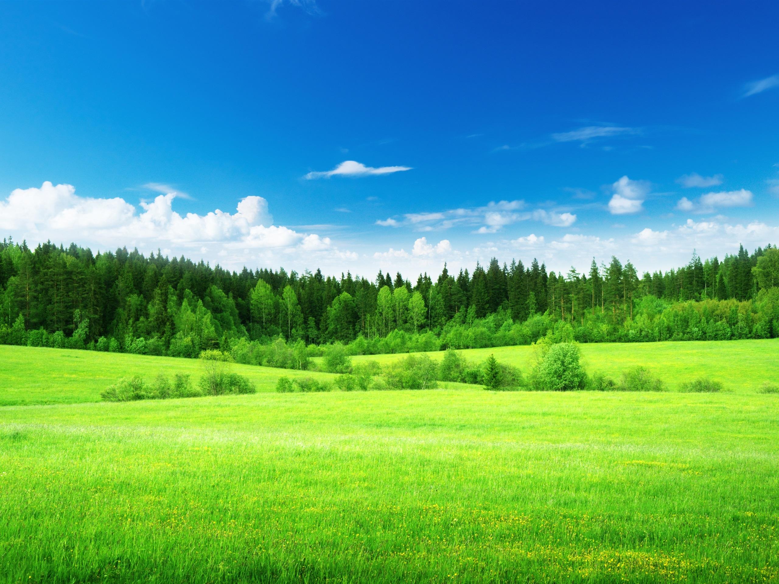 озеро деревья зелень лес лето  № 3246445  скачать