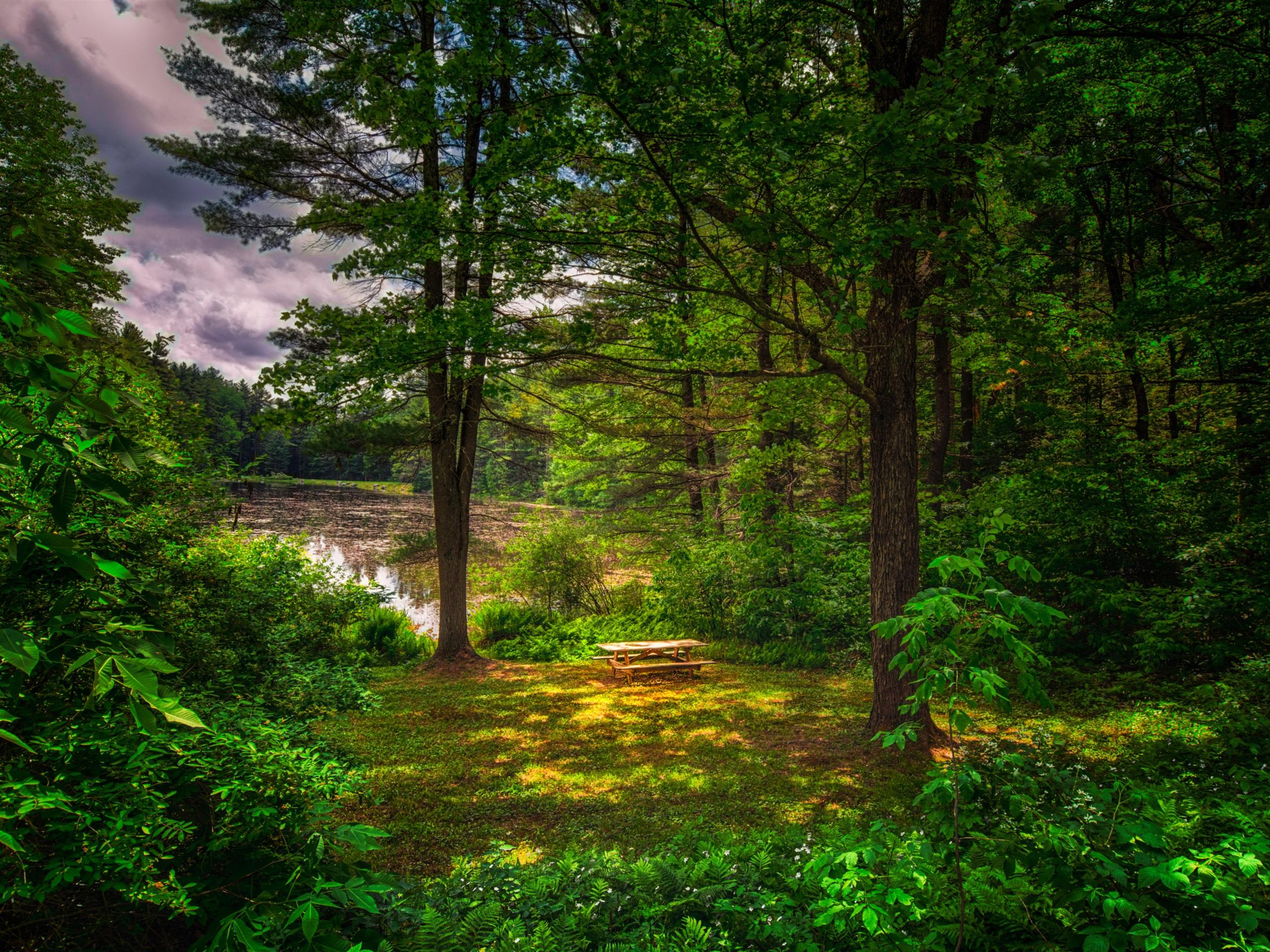 夏天,森林,树木,草地,池塘 壁纸图片