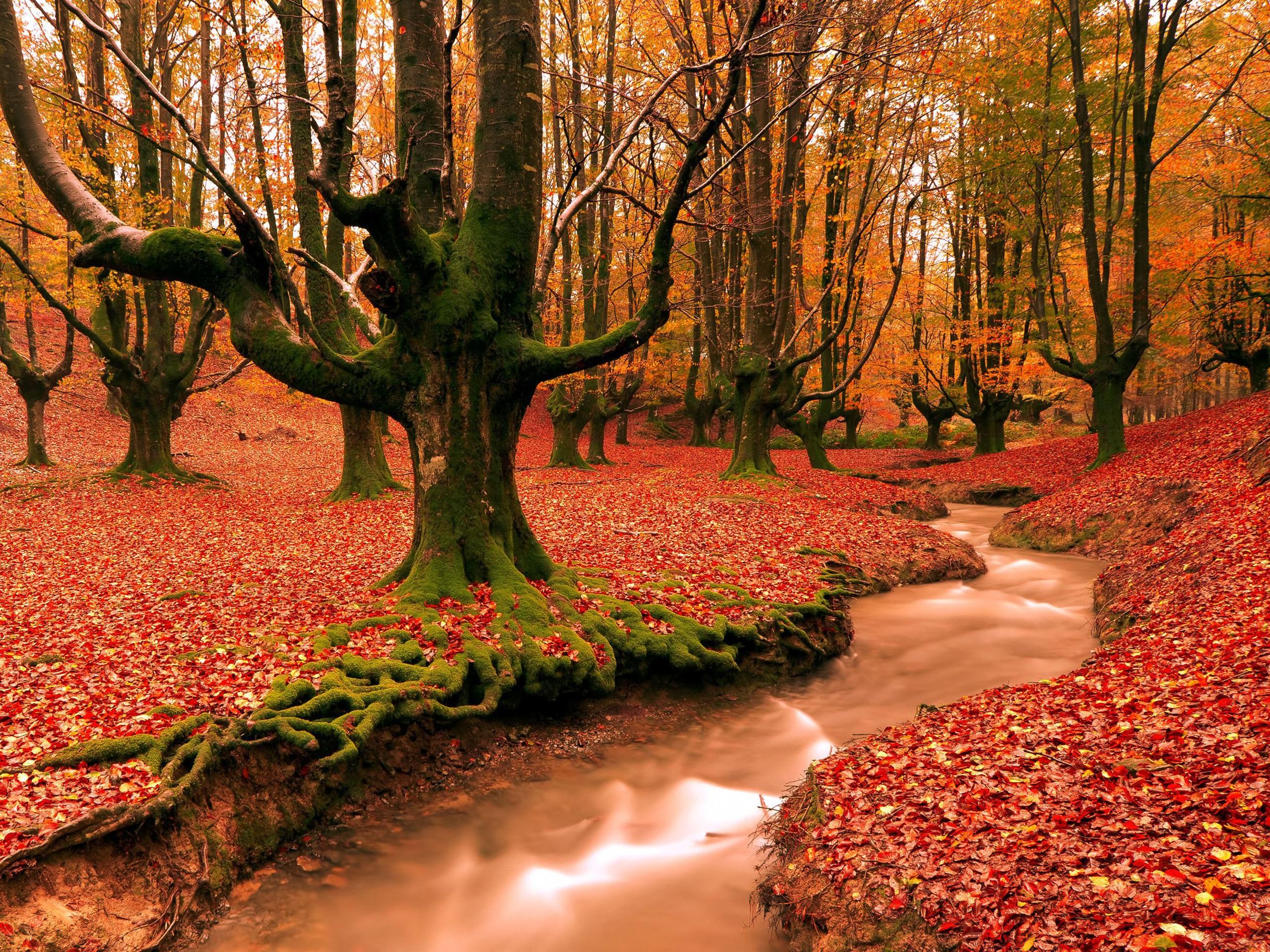 то, необычные картинки аллея красные деревья этого врач вначале