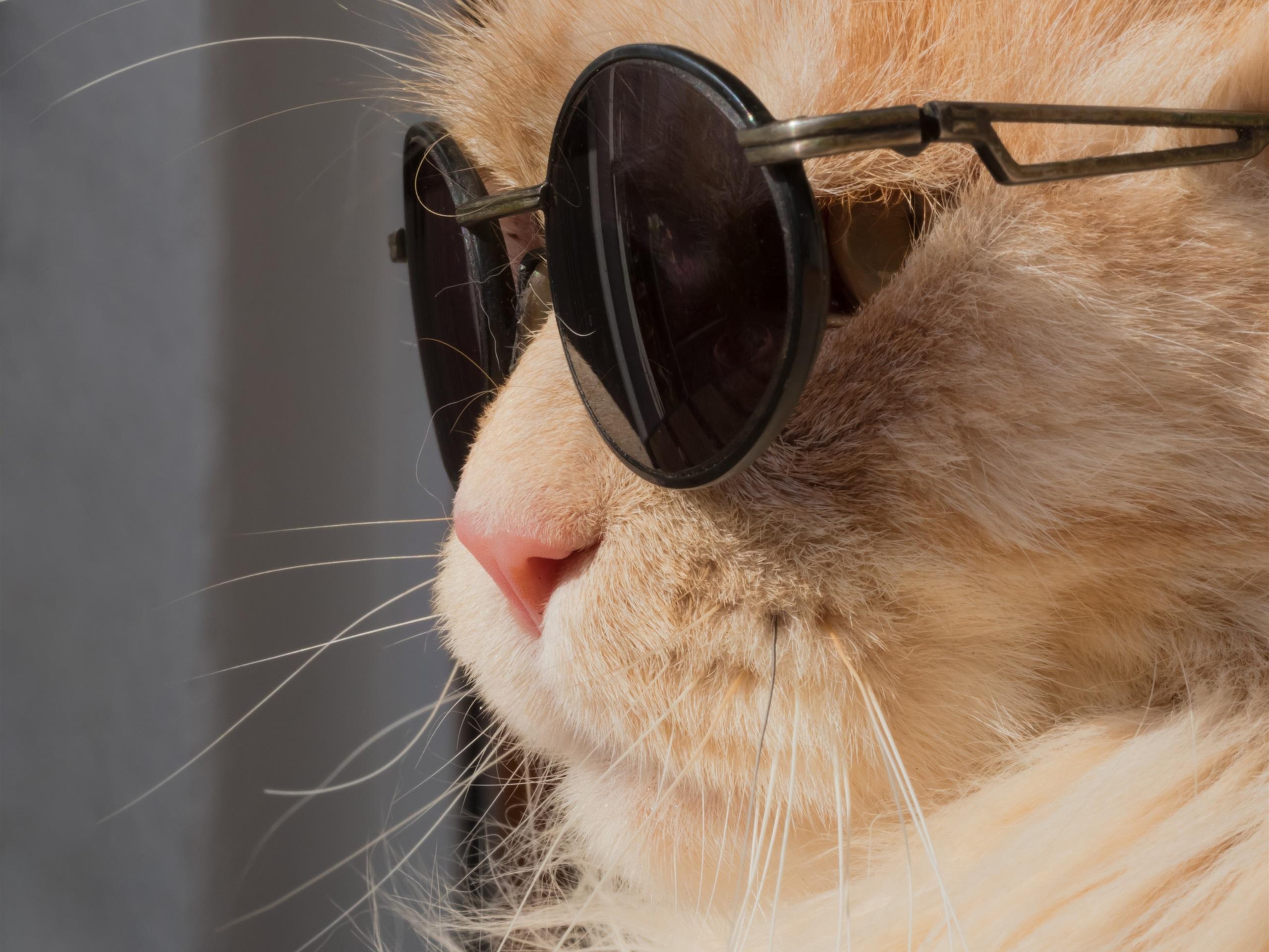 Прикольные картинки на аву с котиками