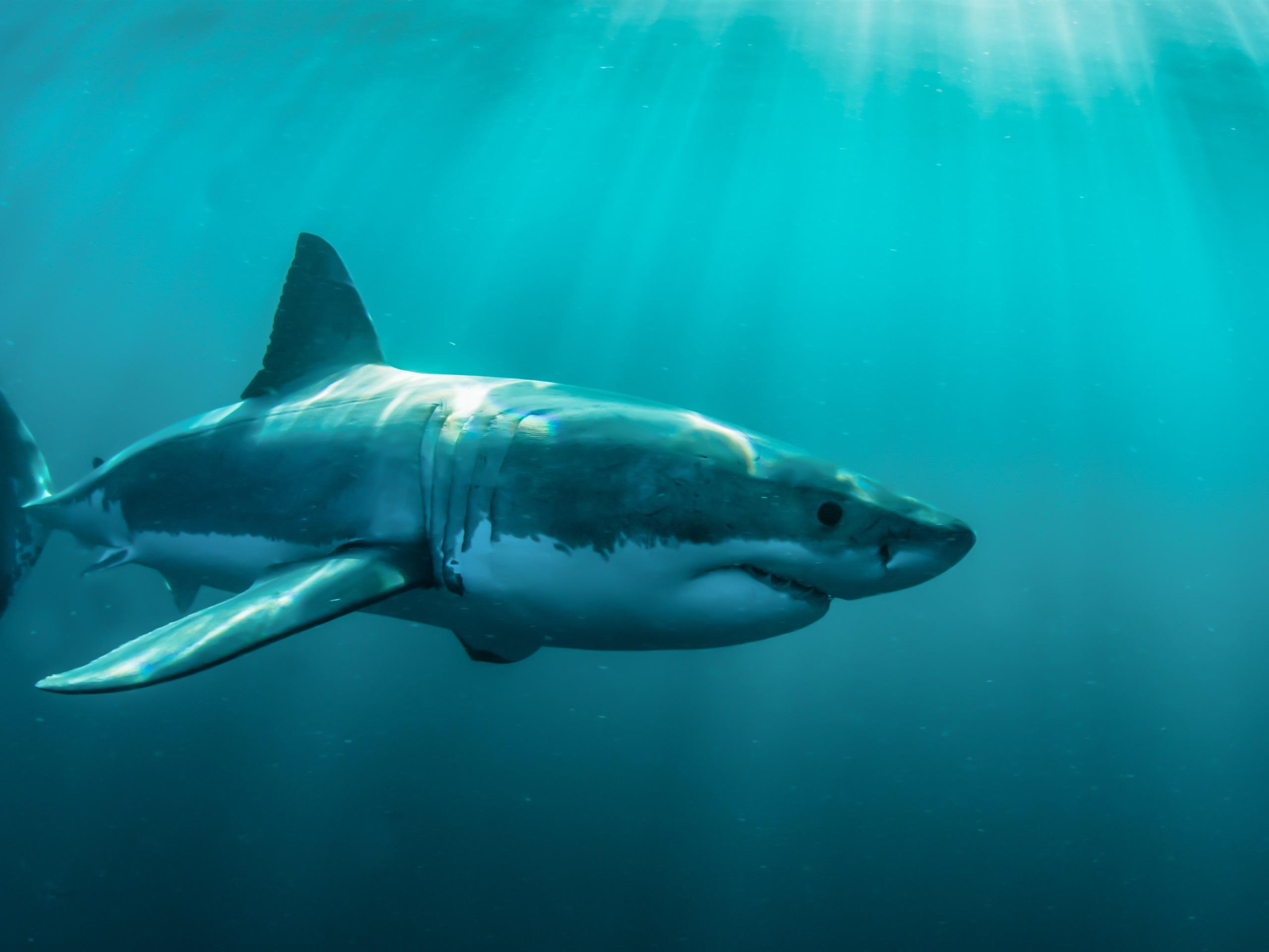 壁紙 海の動物 水中のサメ 2880x1800 Hd 無料のデスクトップの背景 画像