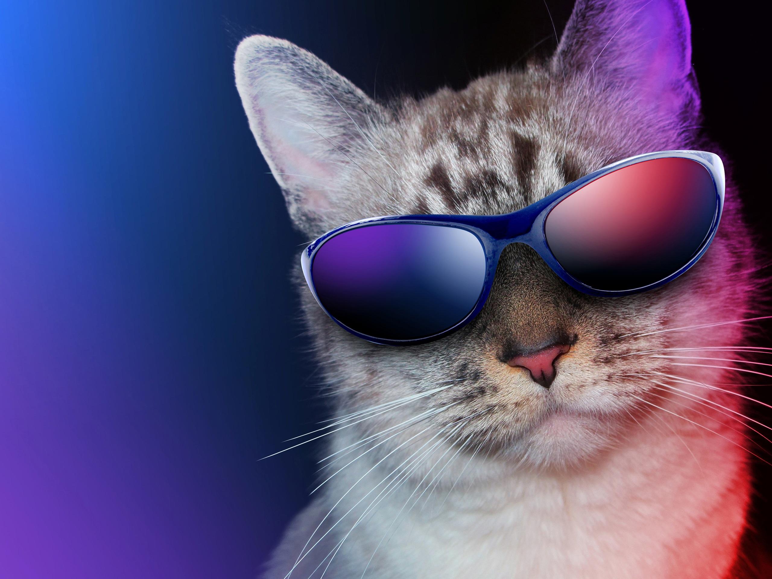 Крутые картинки с котами, кофе сигаретой