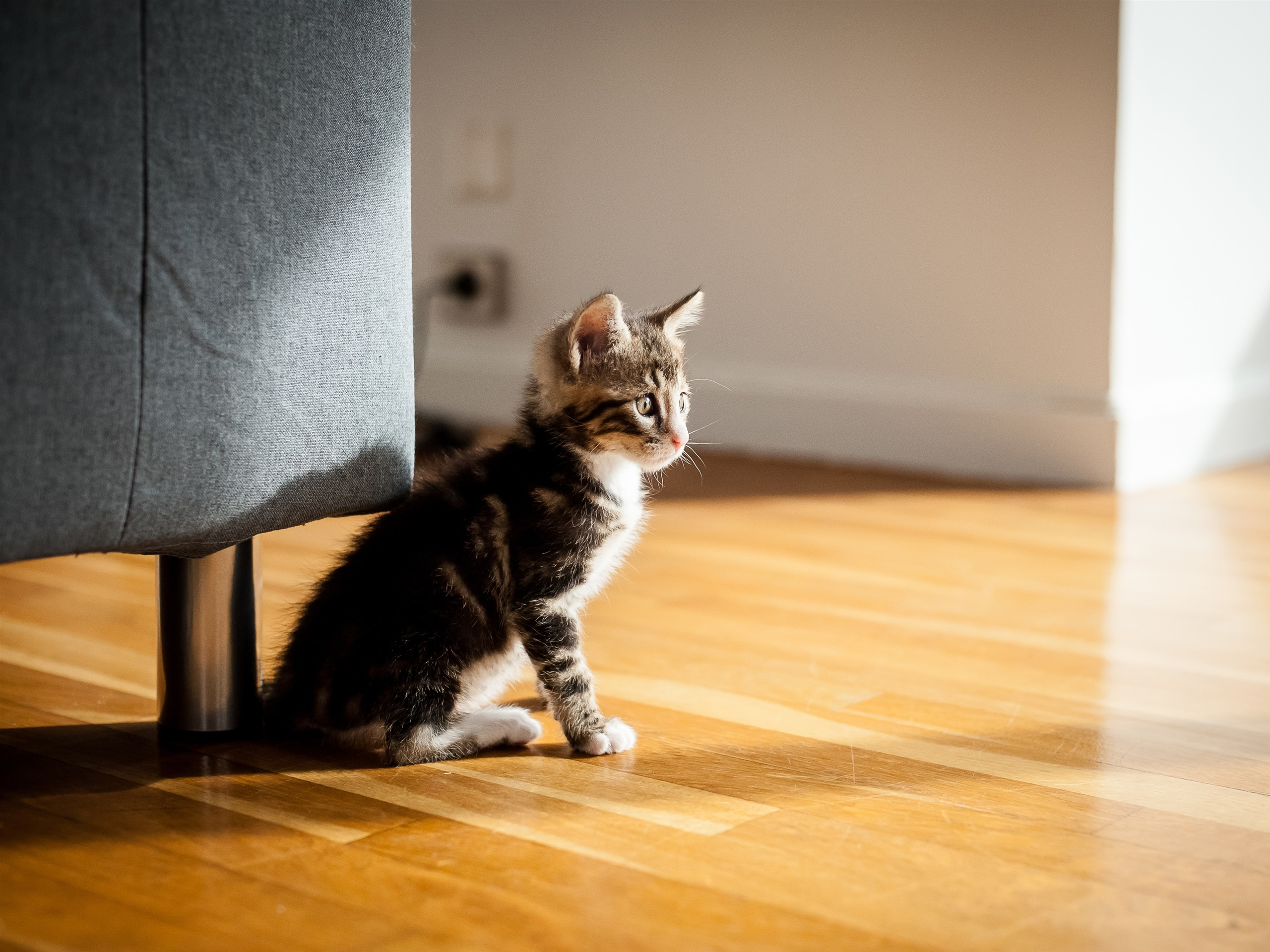 壁紙 部屋の猫 3840x2160 Uhd 4k 無料のデスクトップの背景 画像