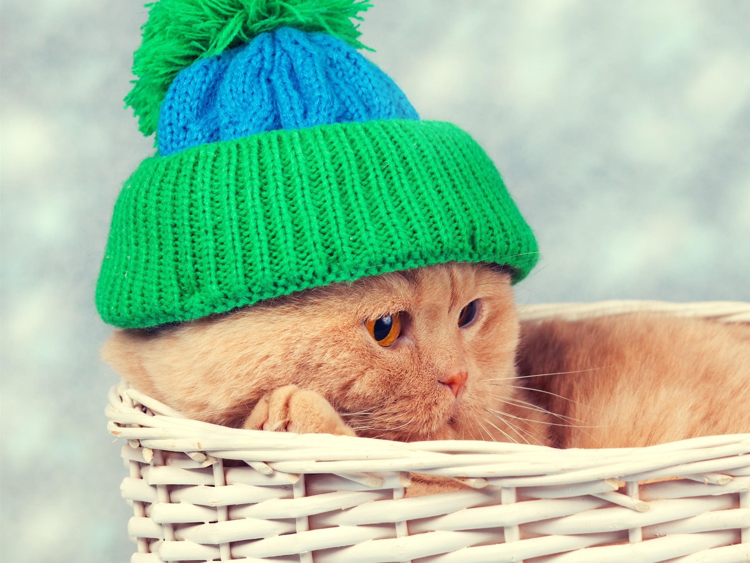 Кот под шапкой  № 3059227 без смс