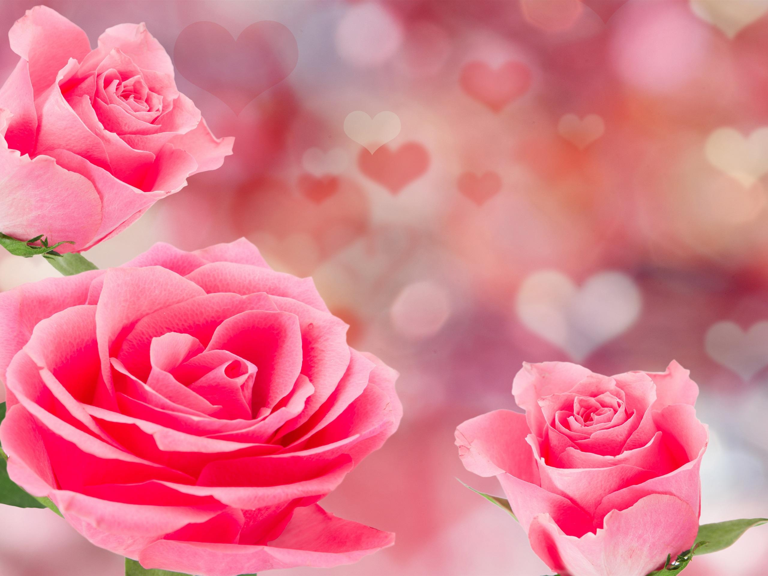 якорь зацепился, фон картинок розы розовый гладкой поверхности минерала
