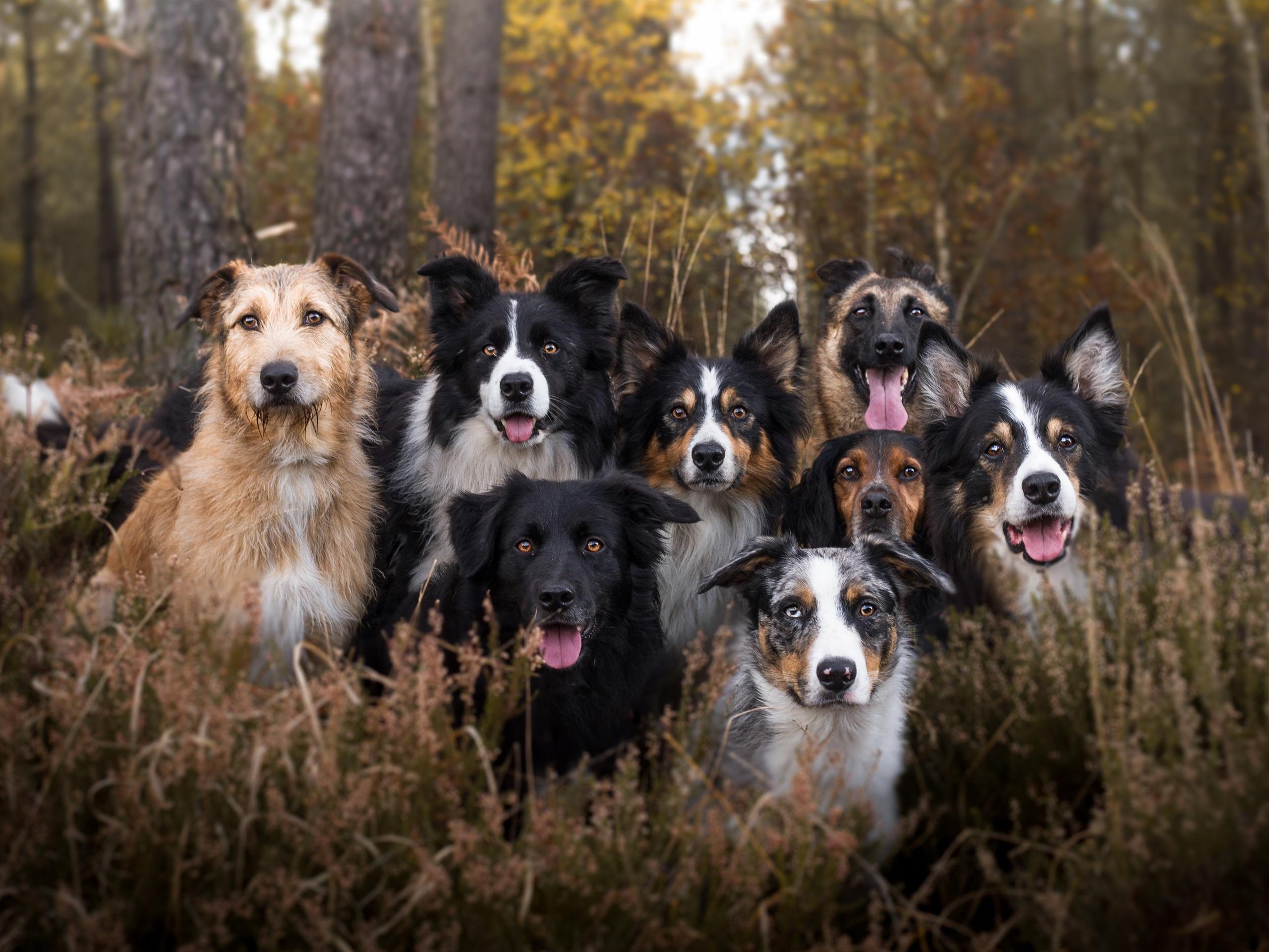 картинки собак разных пород вместе ограничивается