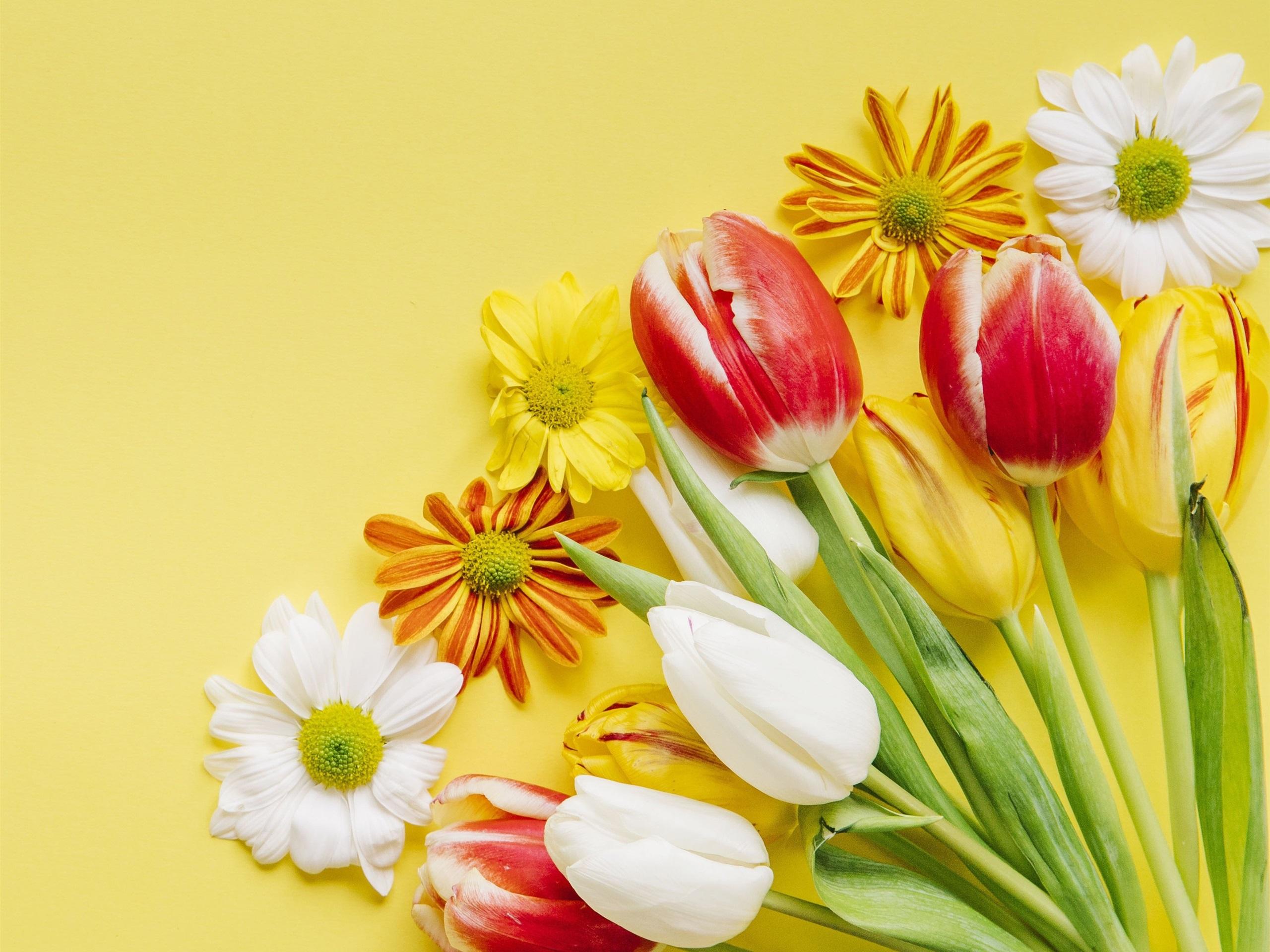 Wallpaper Red Yellow White Flowers Tulips Daisy 2880x1800 Hd
