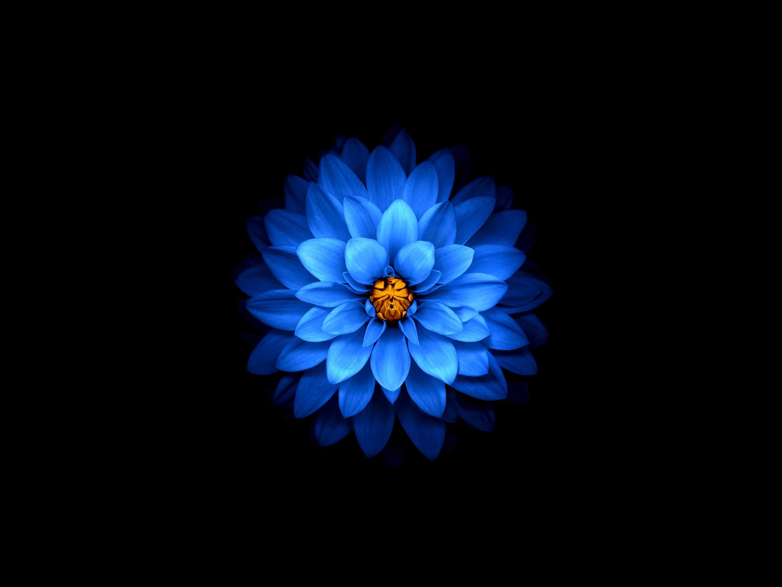 Обои на айфон цветы на темном фоне