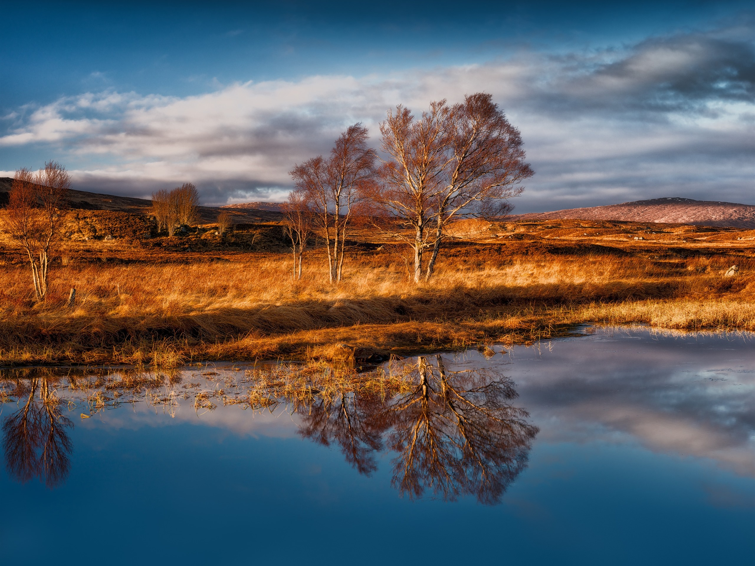 Wallpaper Rannoch Moor, Scotland, Trees, Grass, Water