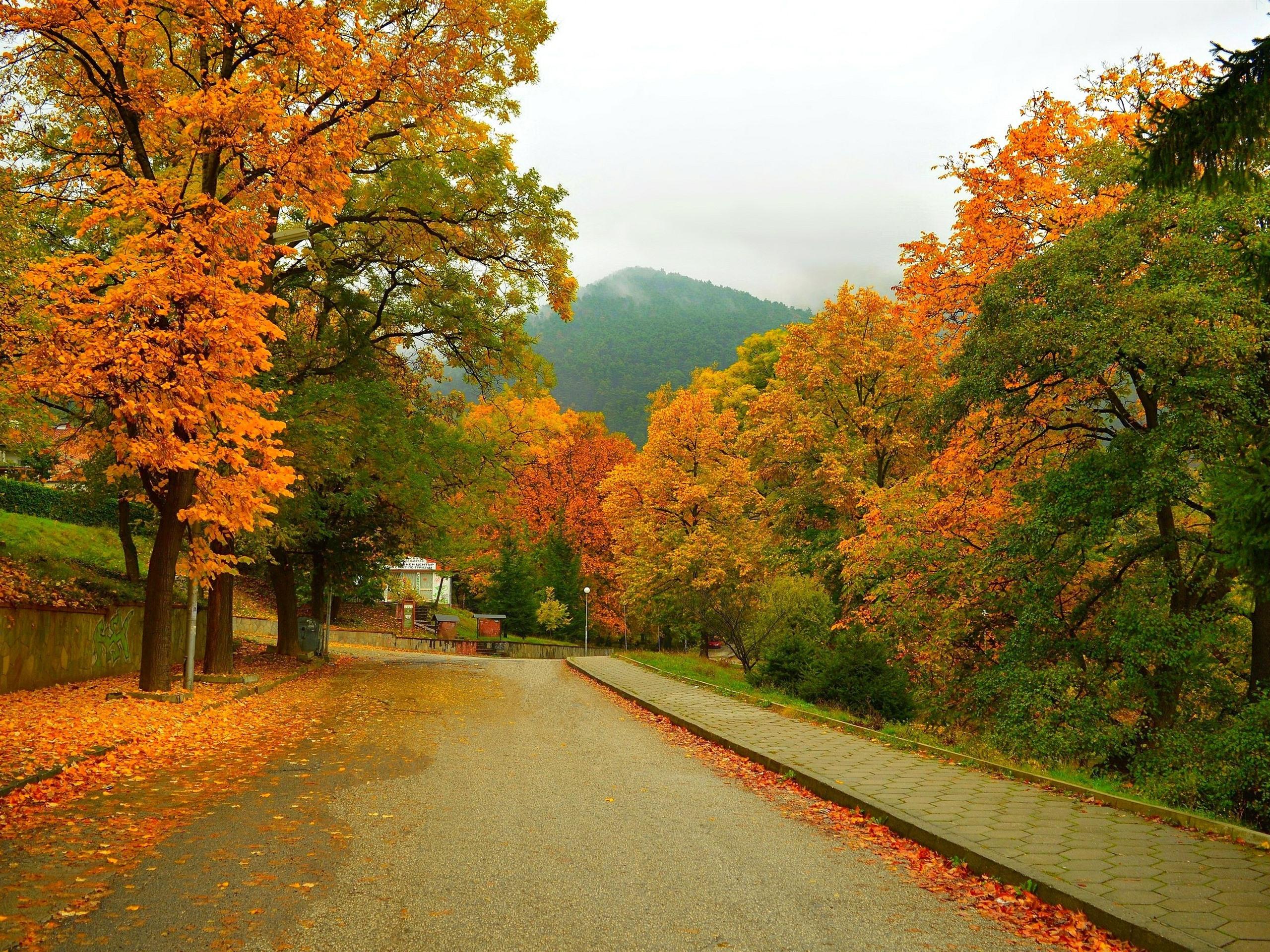 Trees Road Mountain Autumn 1080x1920 Iphone 8766s Plus