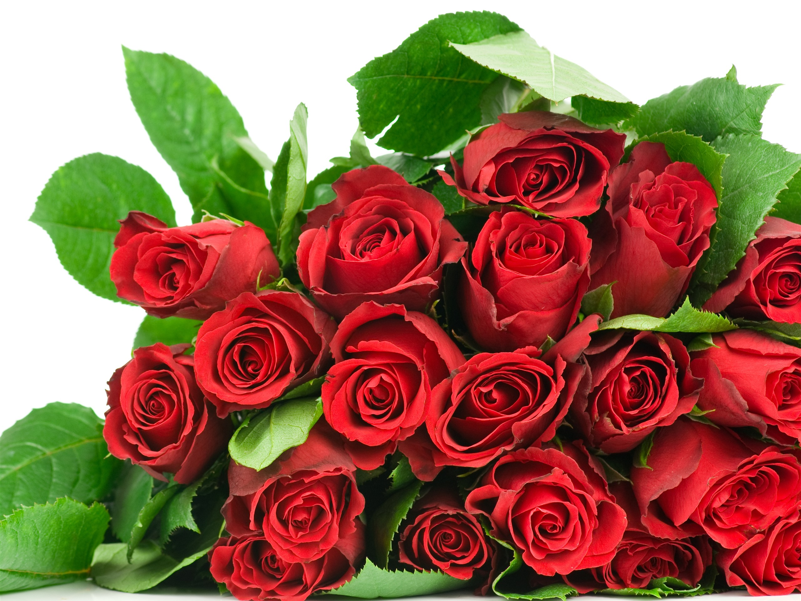 картинка розы на день рождения красные розы редко появляется