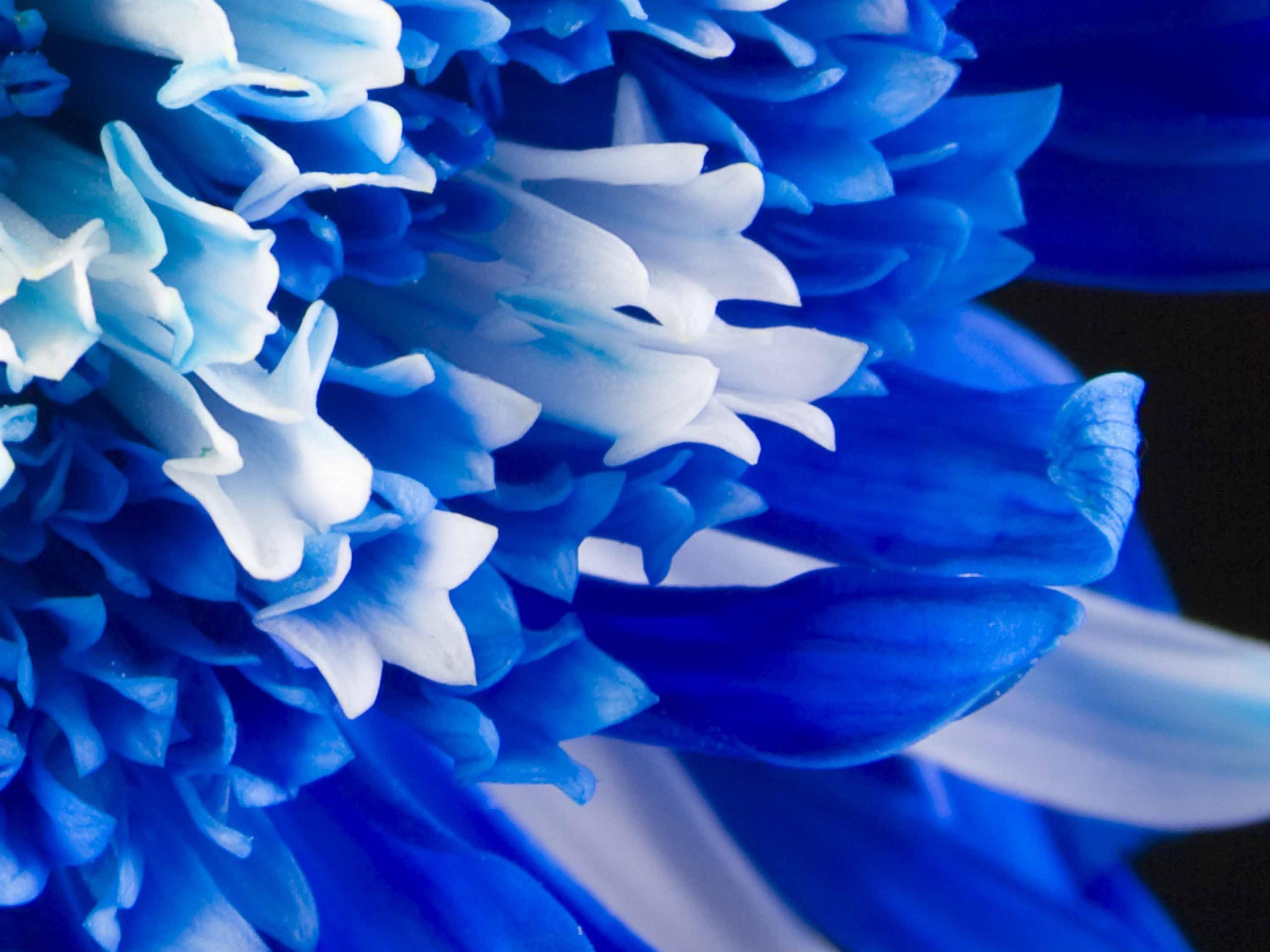 Бело голубая картинка