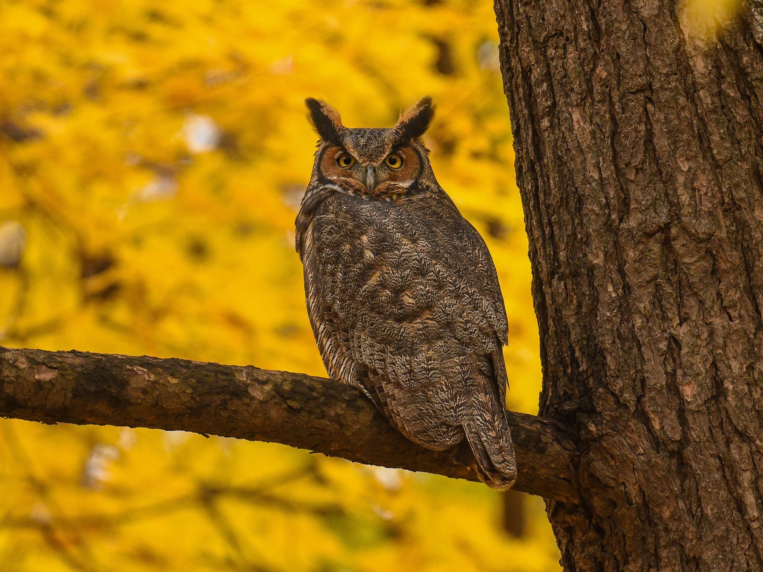 женщина, картинки две совы на дереве регулярно