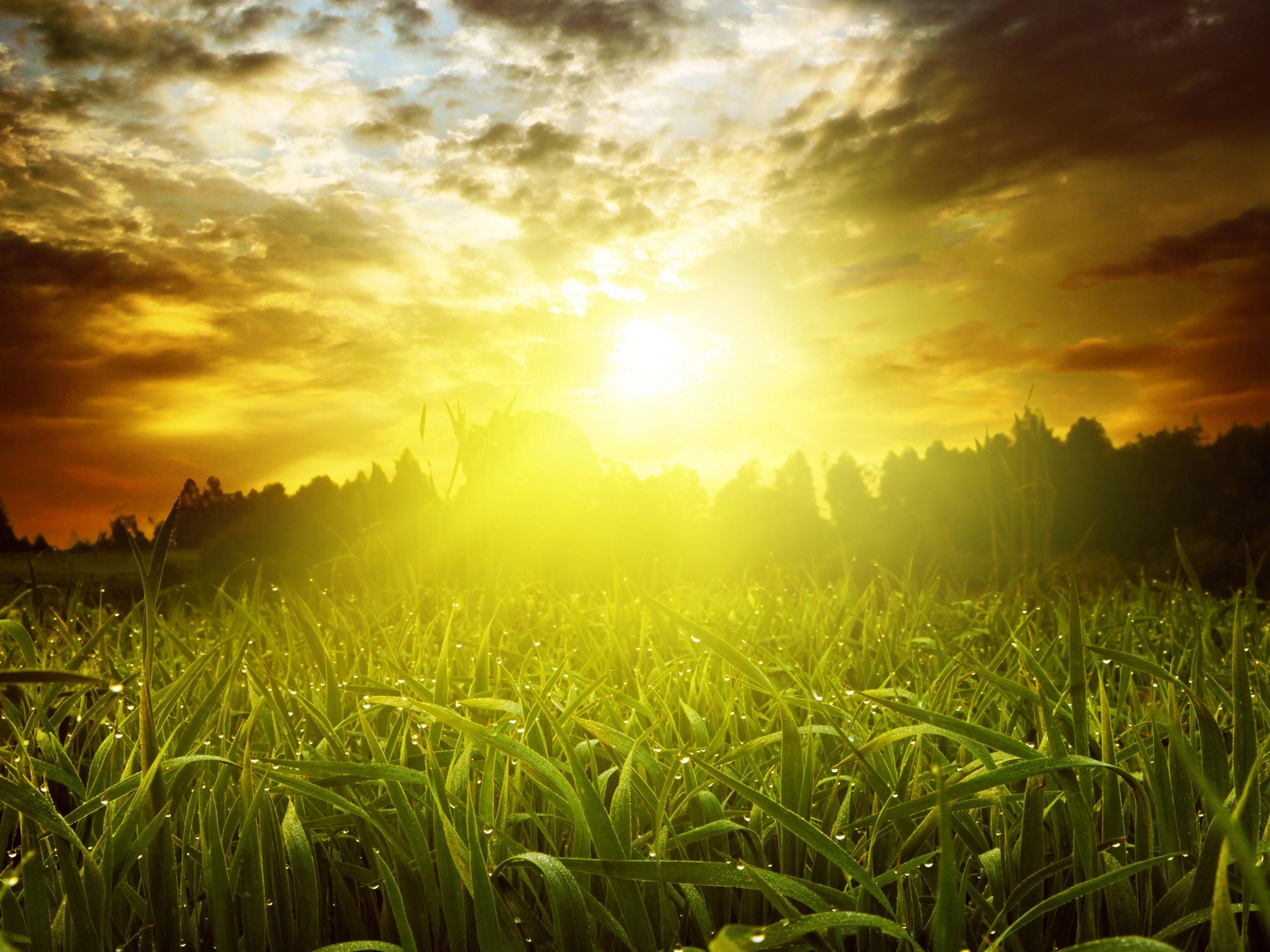 лучи солнца на траве картинки подобных
