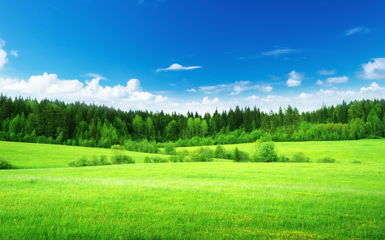 green grass background - HD1920×1252