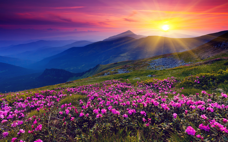 Sunrise-mountains-flowers-grass-dawn_2880x1800.jpg