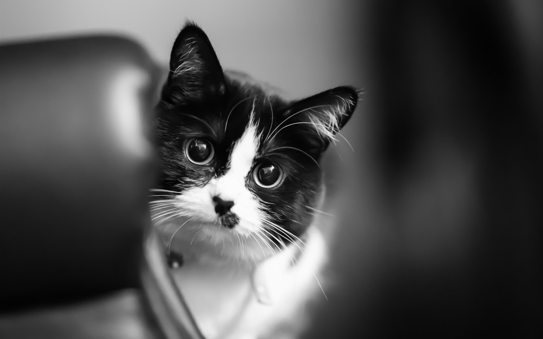 Wallpaper Cute Kitten White Black 3840x2160 Uhd 4k Picture Image