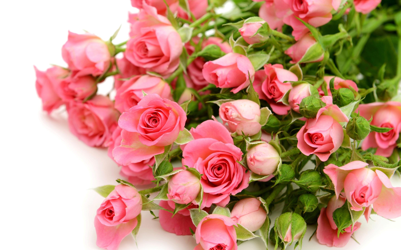 Картинки цветы для поздравления, добрым утречком прикольные