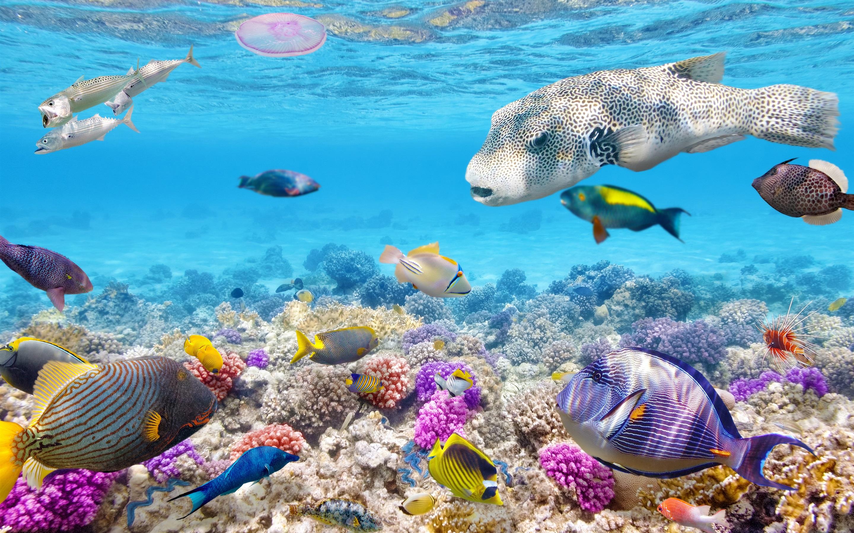 когда-нибудь рыбы в воде картинки конце