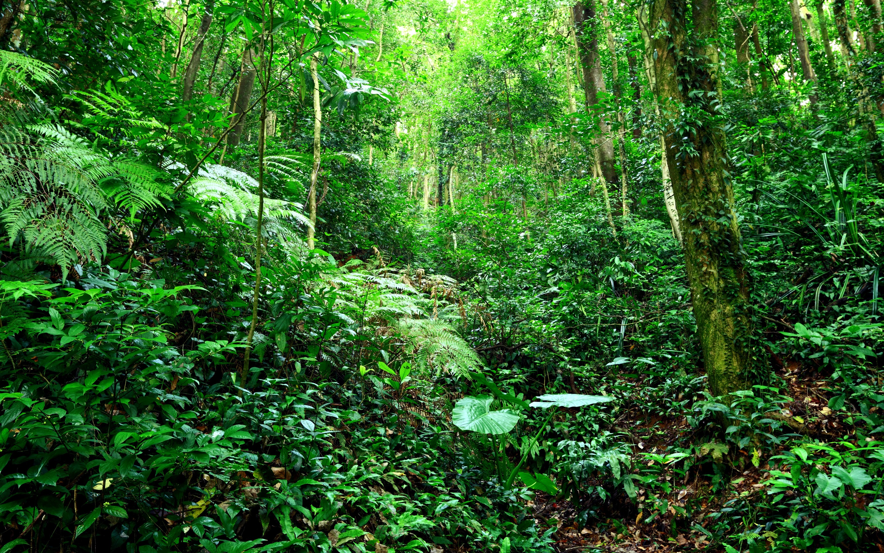 Wallpaper Tropical Forest Jungle Bushes Grass Trees
