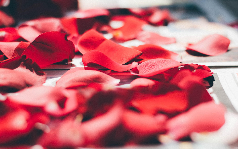 Wallpaper red rose petals macro photography romantic - Red rose petals wallpaper ...