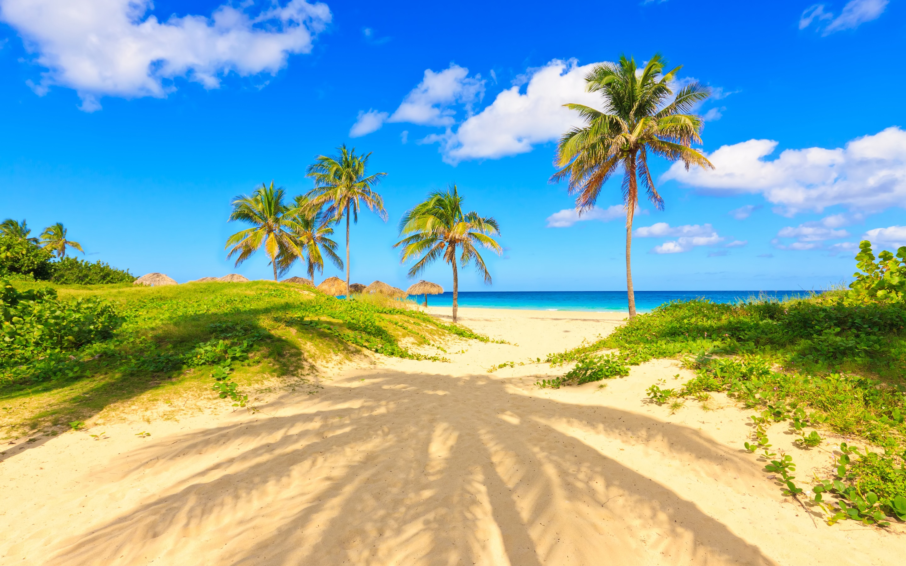 Wallpaper Summer Tropical Palm Trees Sands Sea Beach 2880x1800 Hd Picture Image