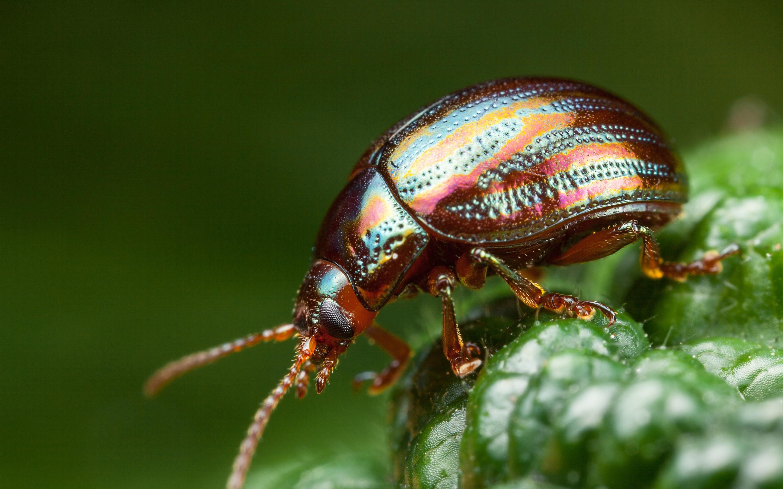 свадьбу жуки картинки и фотографии кремированным этом