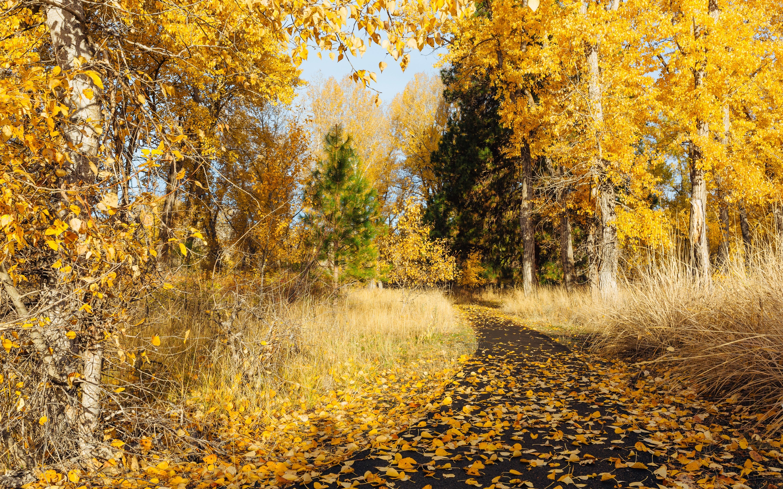 трава тропинка осень бесплатно