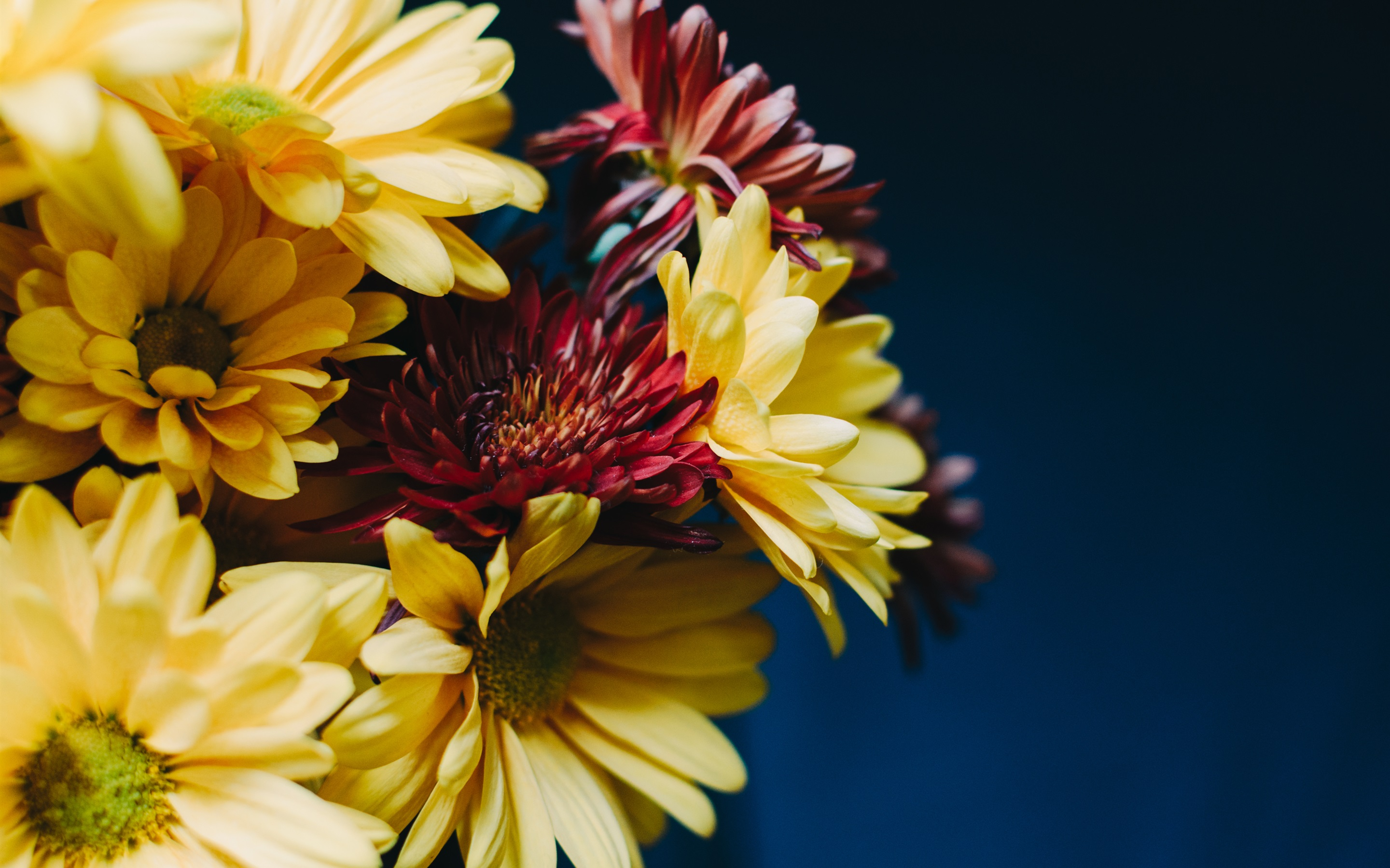 Wallpaper Gerberas Yellow And Red Flowers Bouquet 2880x1800 Hd