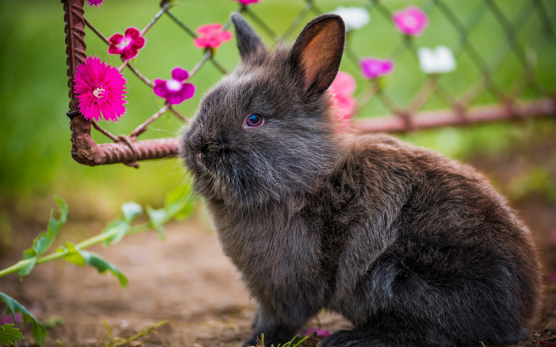 Обои Кролики, Rabbit, осень, листва. Животные foto 8