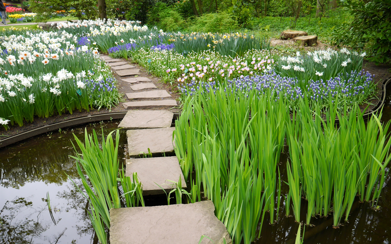 鲜花,路径,水,花园 壁纸