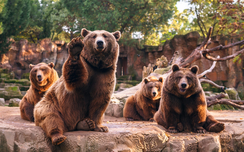 Фотографии медведей для обоев
