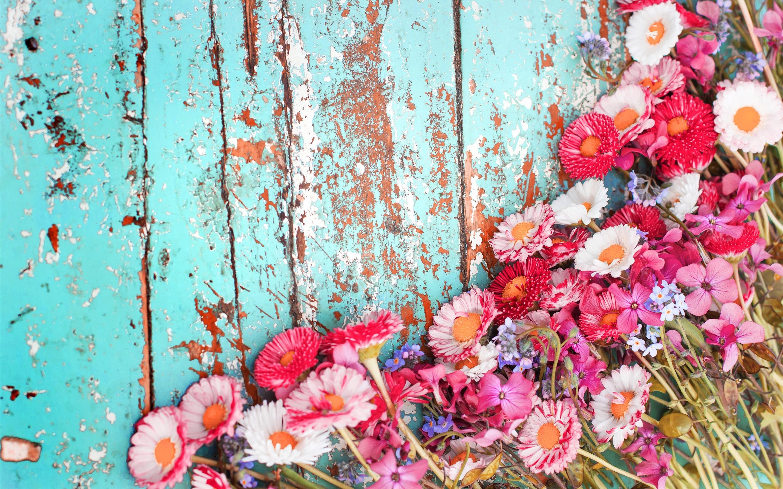 Fondos De Pantalla Hd Flores: Fondos De Pantalla Muchas Flores, Crisantemo Rosado Y