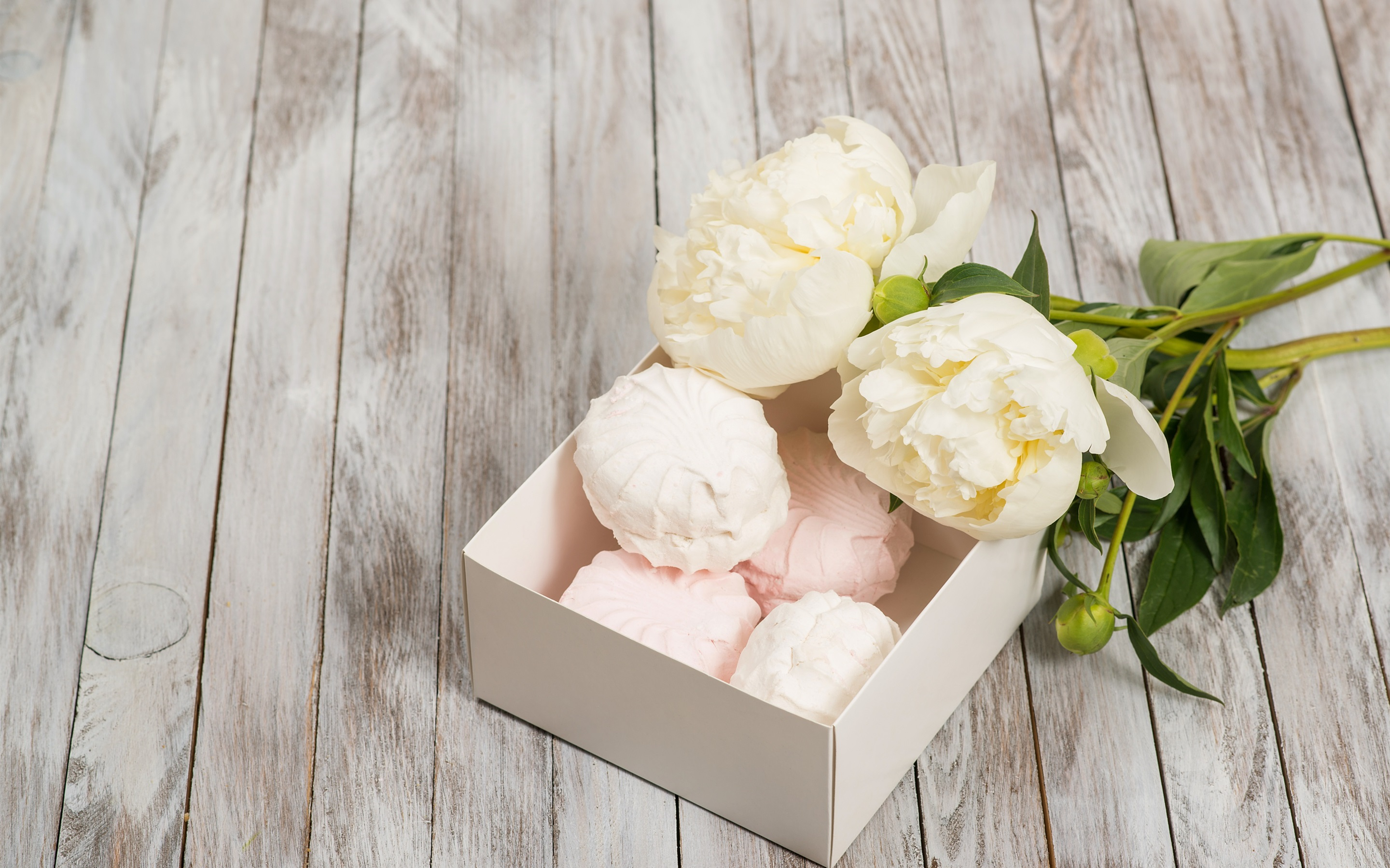 Wallpaper White Peonies Flowers 2880x1800 Hd Picture Image