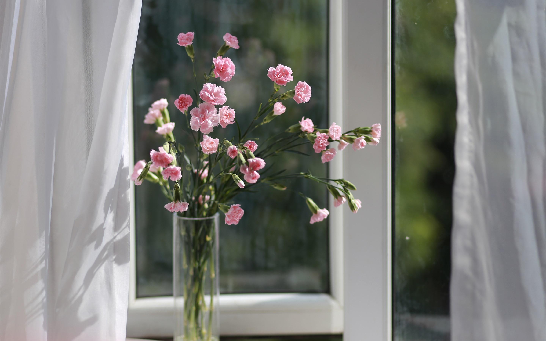 Нежные цветы на окне фото
