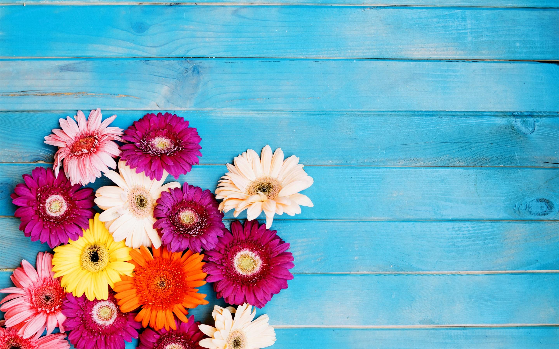 Imagenes Coloridas De Fondo: Fondos De Pantalla Flores Coloridas Del Gerbera, Fondo