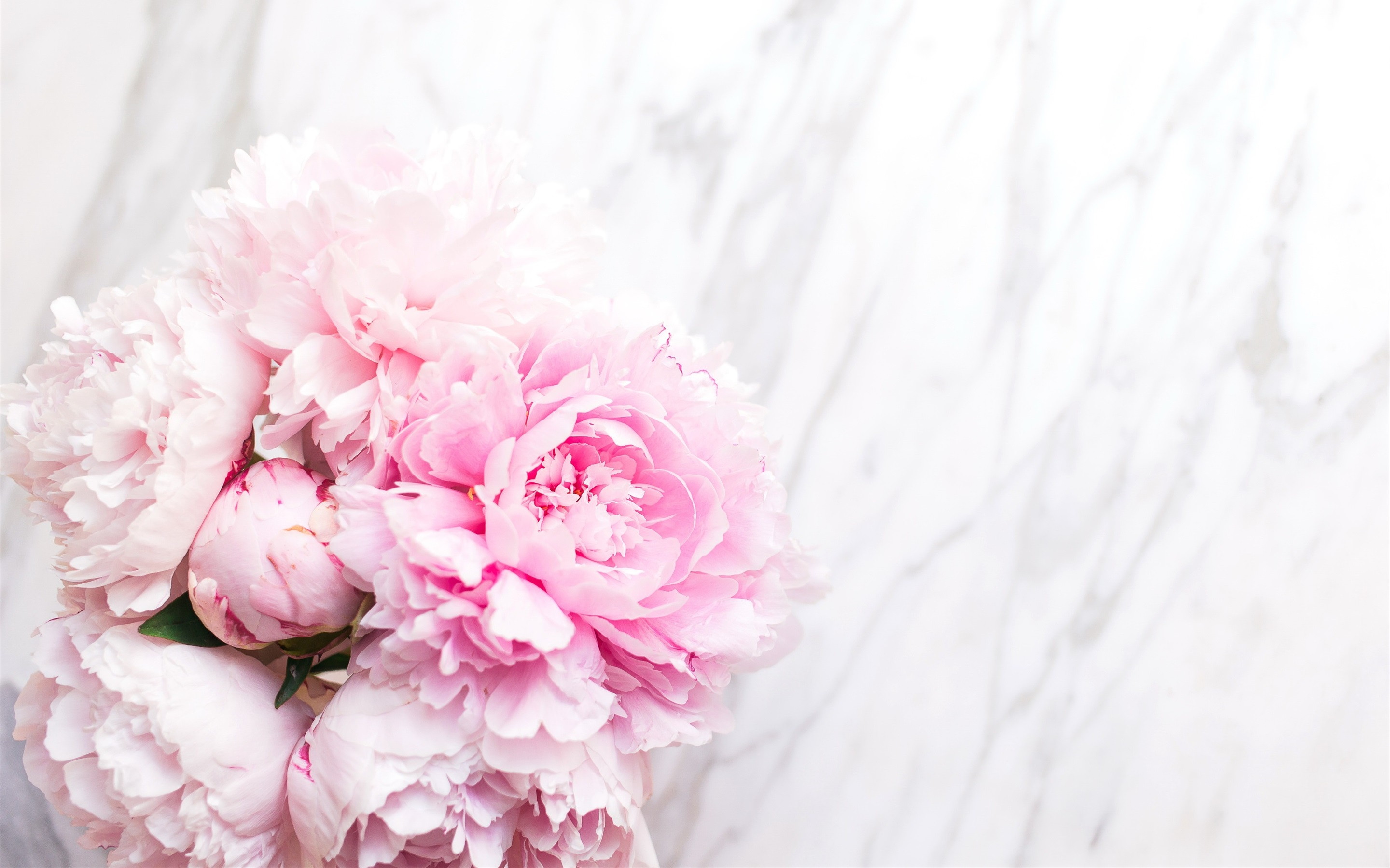 wallpaper pink peonies, tender 2880x1800 hd picture, image