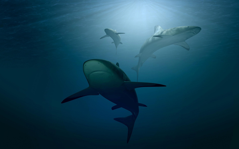 壁紙 サメ 水中 狩猟 2880x1800 Hd 無料のデスクトップの背景 画像