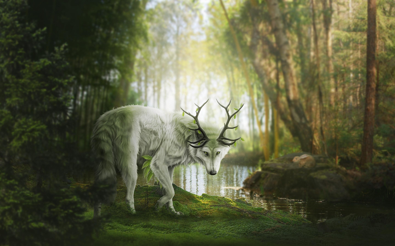 Fonds D écran Animal Fantastique Loup Ou Cerf Forêt