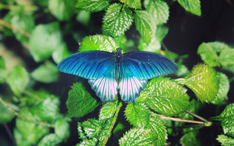 Голубые зеленые картинки