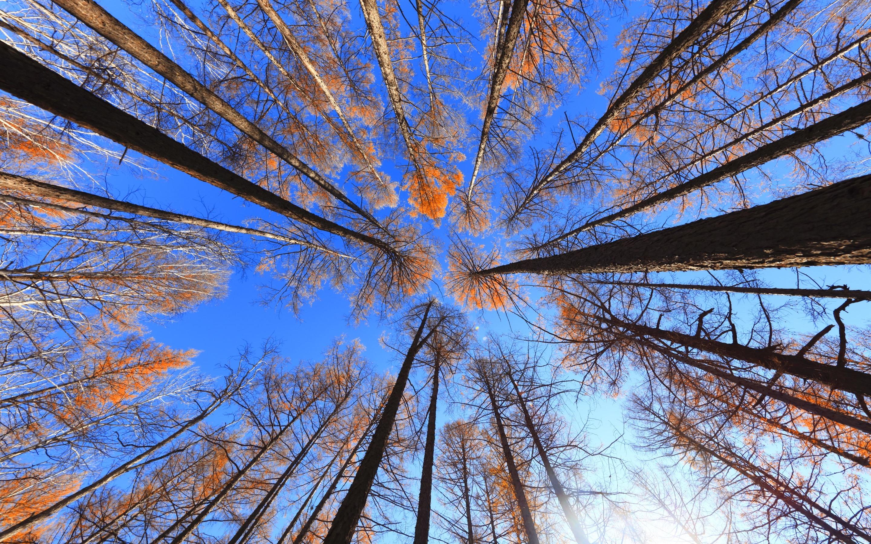 Fondos De Pantalla Iphone 7 Plus: Bosque, Arboles, Cielo Azul, Paisajes De Naturaleza