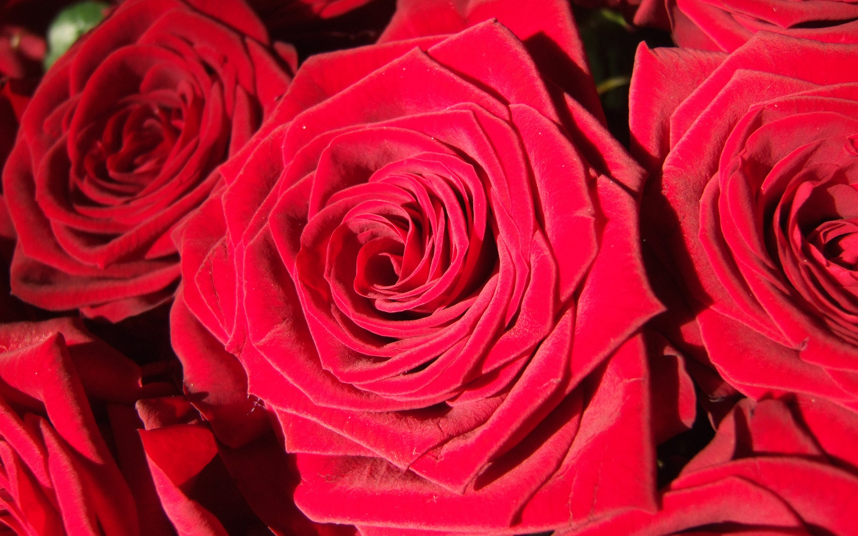 тогда один красные только красные цветы фото про ёжиков